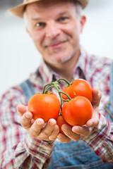 Farmer holding fresh harvested tomatoes