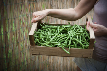 Person brings box of green beans