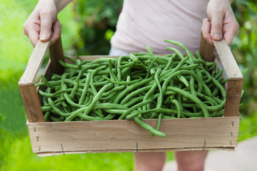 Person bring box of green beans