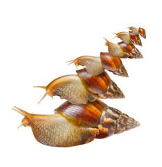 Many snails