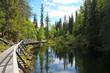 Nature en finlande