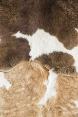 Cow skin