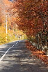 Autumn road in Transylvania