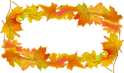 orange autumn maple leaves frame isolated on white