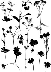 seventeen black wild flowers on white