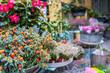 Flower stand in the center of Copengahen, Denmark.