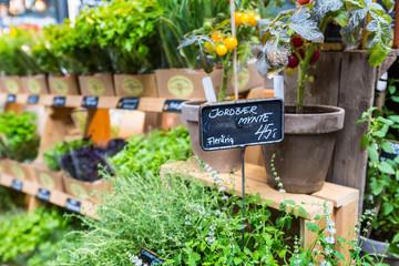 Different fresh green herbs on market in Copenhagen, Denmark.