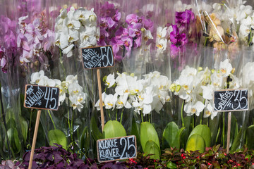Beautiful colorful Orchid flowers in flower shop