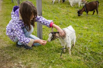 Kleines Mädchen füttert eine Ziege durch einen Zaun