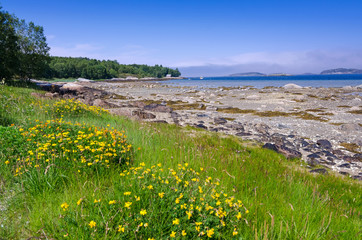Beautiful summer fauna on Norwegian sea coast