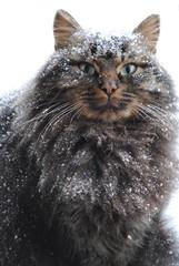 Snow-capped kitten