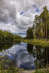 the wood on lake coas