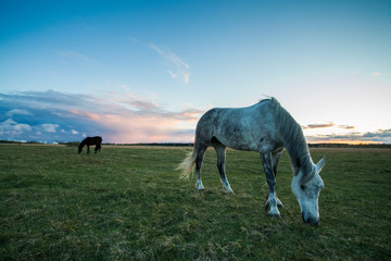 Two horses eats grass at field after sunset