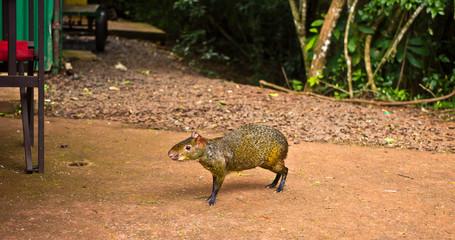 Fauna tropicale