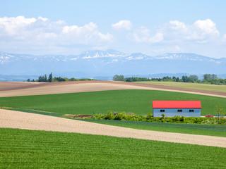北海道 美瑛の田園風景