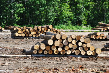 Large Logs Stacked in a Logging Camp