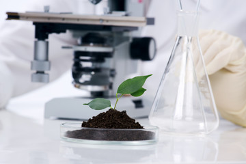 growing plant in a lab