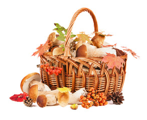 Mushrooms in basket