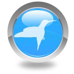 colibri sur bouton