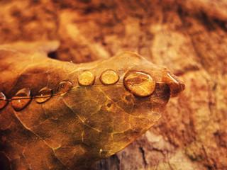 Perles de pluie - Douceur d'automne