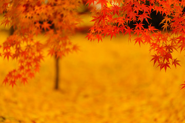 autumn colored leaves with blurred background