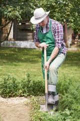 Gardener take care about garden in spring