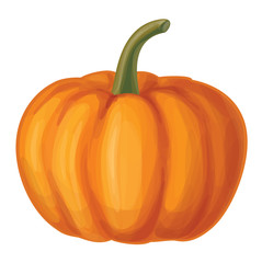 Vector orange pumpkin isolated.