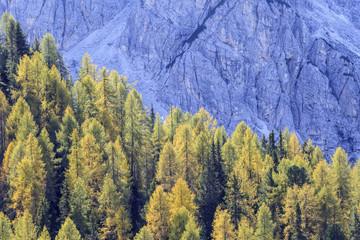 Larch tree woods