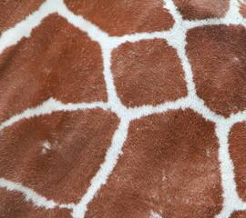 giraffe coat pattern
