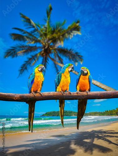 Leinwanddruck Bild Blue-and-Yellow Macaw Ara ararauna parrots