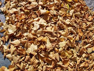 Autumn winter leaves