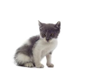 little kitten looks