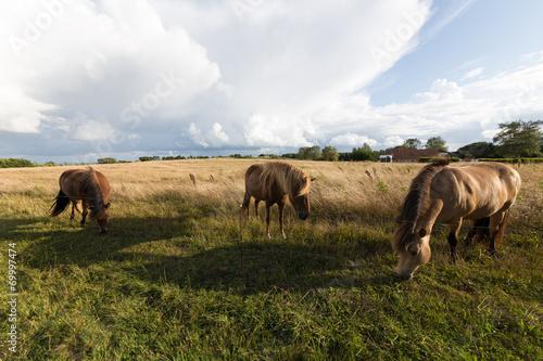 canvas print picture Drei dänische Pferde