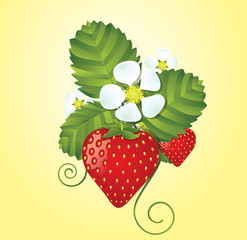 Strawberry floral background