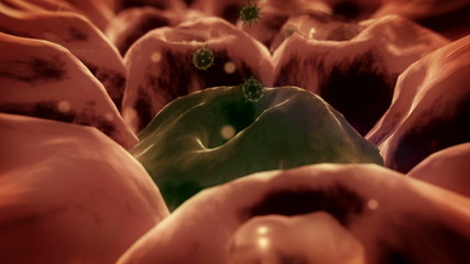 virus, cells