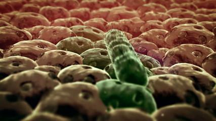 bacteria, cells