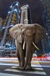 Leinwandbild Motiv A metropolitan jungle with elephant walking on the road