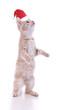 Katzenbaby mit Nikolausmütze