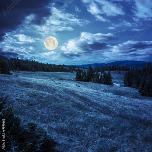 pine trees near valley on mountain slope at night