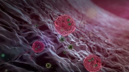 Phagocyte and virus
