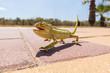 Obrazy na płótnie, fototapety, zdjęcia, fotoobrazy drukowane : Juvenile Chameleon on a promenade in Andalusia, Spain