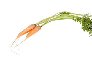 Carrots with tops isolated on white background
