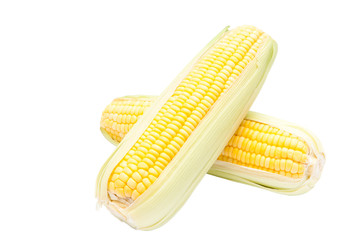 Corn isolated with clipping path