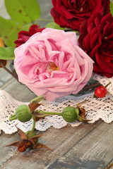 Rosenzauber im Herbst