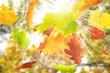Herbst 5