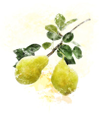 Watercolor Image Of Yellow Pears