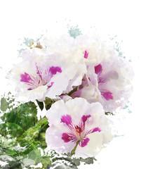 Watercolor Image Of Geranium Flowers