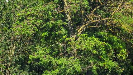 Flock of Birds on  a Green Tree