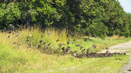 Flock Of Birds Flying On And Off The Ground