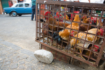 Cage of hens